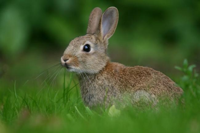 rabbit-hare-look-1026373-800x533.jpg
