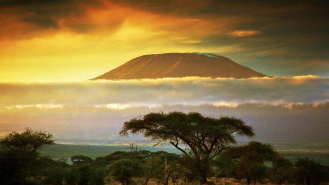 afrika-rasteniya-24.jpg