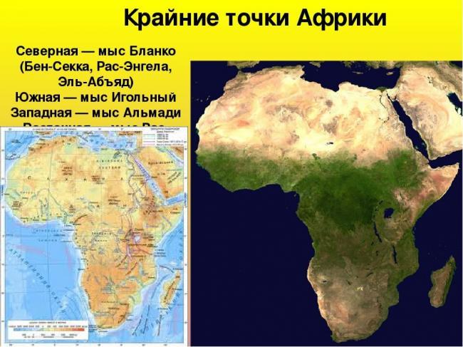 afrika-rasteniya-23.jpg
