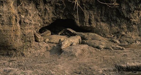 Крокодильи-норы.jpg