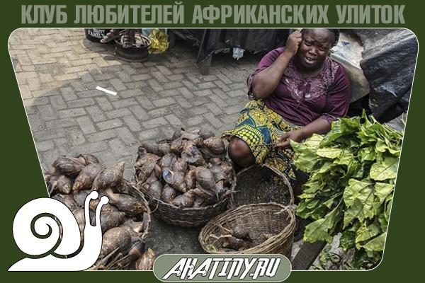 Achatina-Fulica-v-afrike-kulinarii.jpg