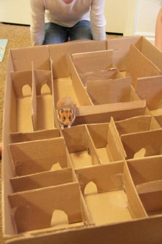 labirint-iz-kartona-e1506458363338.jpeg