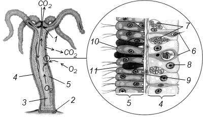 hydrozoa1.png