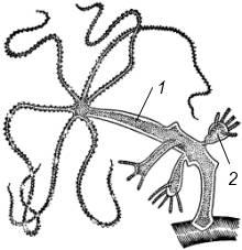hydrozoa2.png