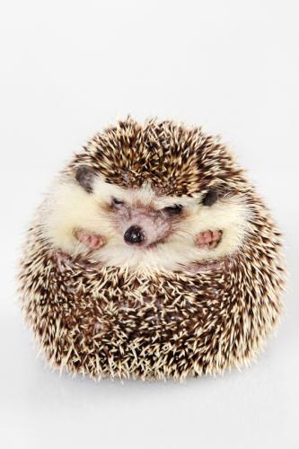 hedgehog1.jpg?fit=566%2C848&ssl=1