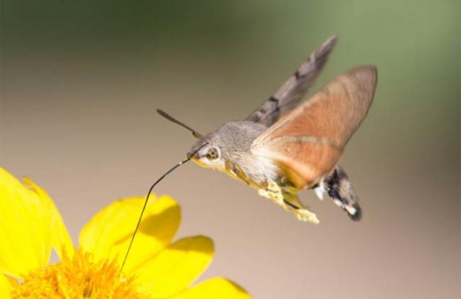 nektar.jpg