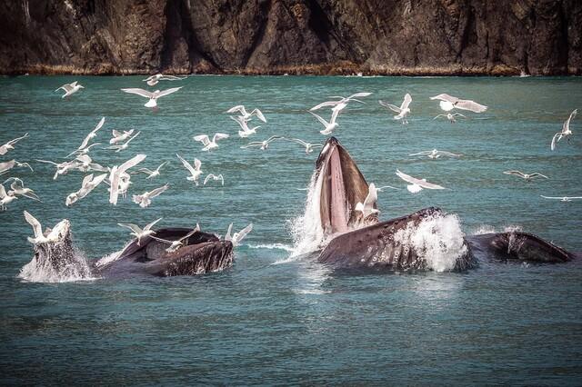 fauna-tihogo-okeana.jpg