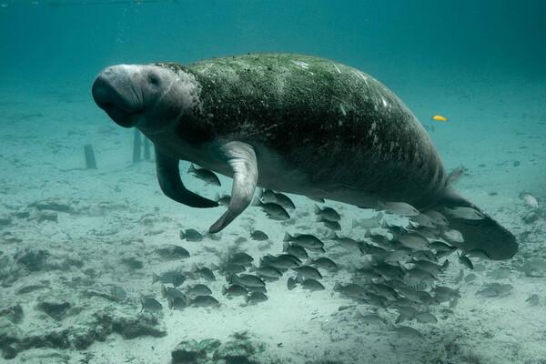 fauna-tihogo-okeana-02.jpg
