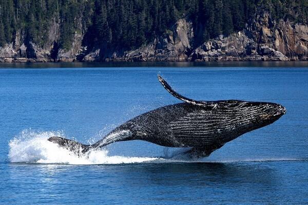 fauna-tihogo-okeana-04.jpg