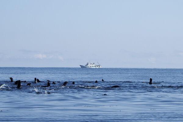 fauna-tihogo-okeana-05.jpg