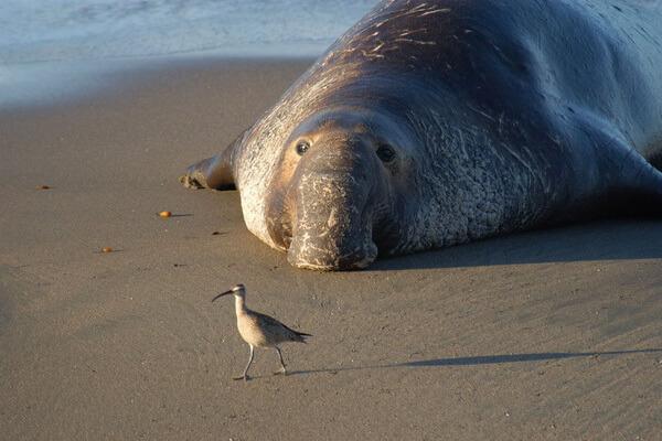fauna-tihogo-okeana-06.jpg