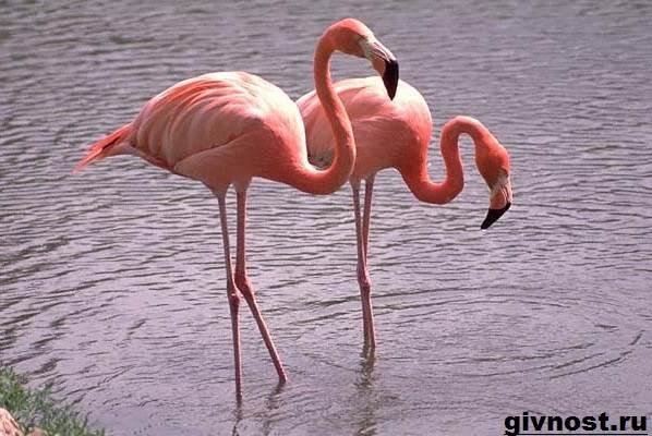pticy-afriki-opisaniya-nazvaniya-i-osobennosti-ptic-afriki-142.jpg