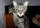 Ojos-azules-1-80x57.jpg