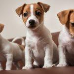 dog-photo-150x150.jpg