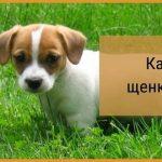 kak-nauchit-schenka-komandam-150x150.jpg