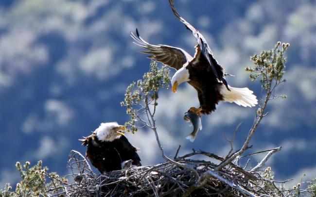 eagles-0620-1024x640.jpg