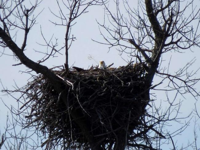 Milltown-nest-3-20-14-0620-1024x768.jpg