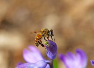 Closeup_Bees_Insects_Bokeh_602555_600x438.jpg