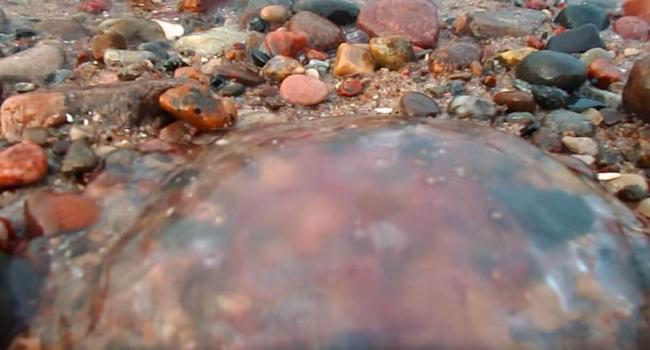 meduza-aureli-na-plyazhe.jpg