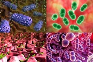 vidy-bakterij-e1441607779687-300x201.jpg
