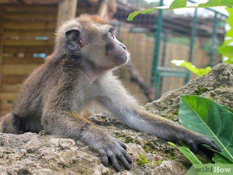 v4-460px-Take-Care-of-a-Monkey-Step-1.jpg