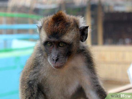 v4-460px-Take-Care-of-a-Monkey-Step-2.jpg