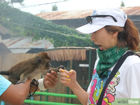 v4-460px-Take-Care-of-a-Monkey-Step-3.jpg