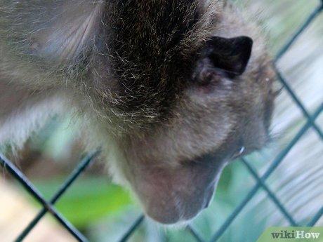 v4-460px-Take-Care-of-a-Monkey-Step-4.jpg
