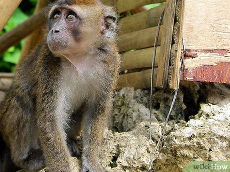 v4-460px-Take-Care-of-a-Monkey-Step-5.jpg