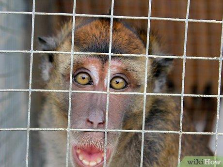 v4-460px-Take-Care-of-a-Monkey-Step-6.jpg