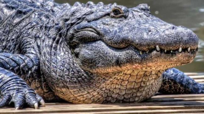 krokodil-6-2.jpg