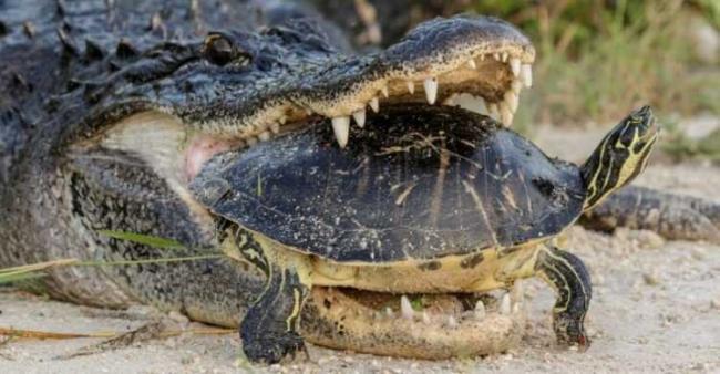krokodil-13-1.jpg