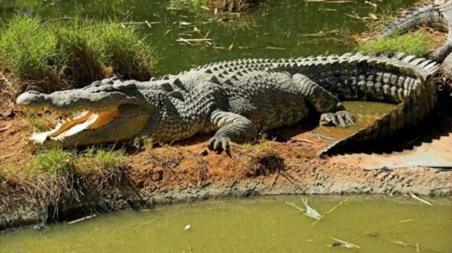 krokodil-46.jpg