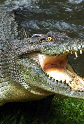 krokodil-51.jpg