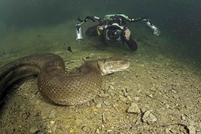samye-opasnye-zhiteli-amazonki-krokodily-voobshhe-tsvetochki-po-sravneniyu-s-nimi_002.jpg