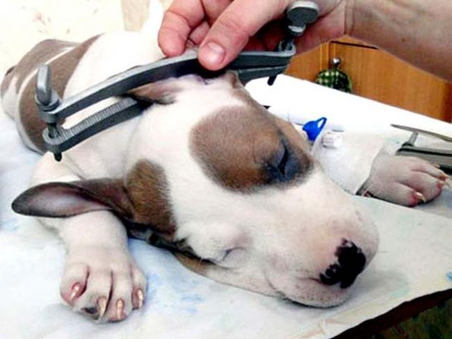 6-Popadanie-infektsii-v-ranu-pitomtsa-mozhet-vyzvat-vnutricherepnoe-zabolevanie.jpg