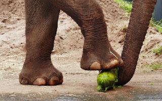 FeetElephant.jpg