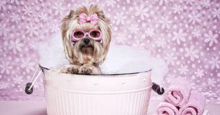 Собака устроила «лакшери СПА» в раковине и заставила весь мир себе завидовать!