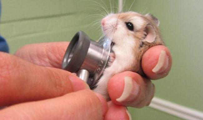 u-veterinara.jpg