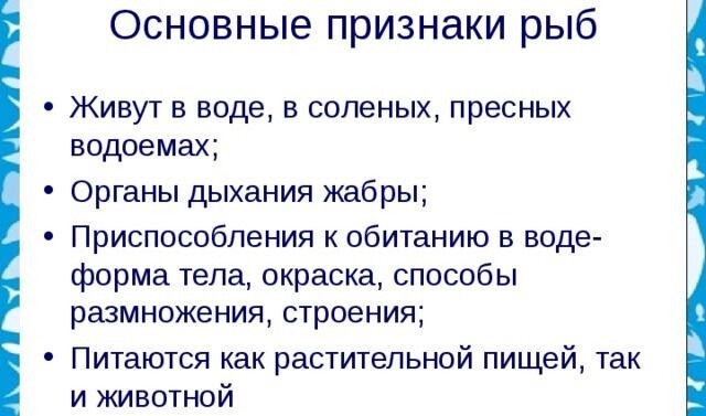 k-kakomu-klassu-otnosyatsya-ryby-6.jpg