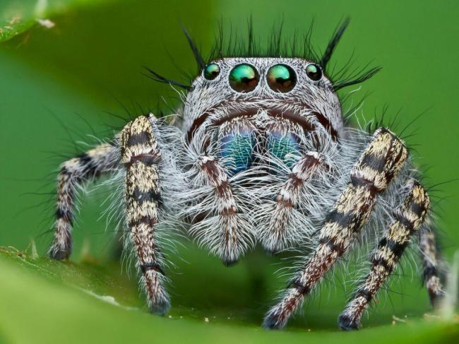 predstavitel-paukov-69.jpg