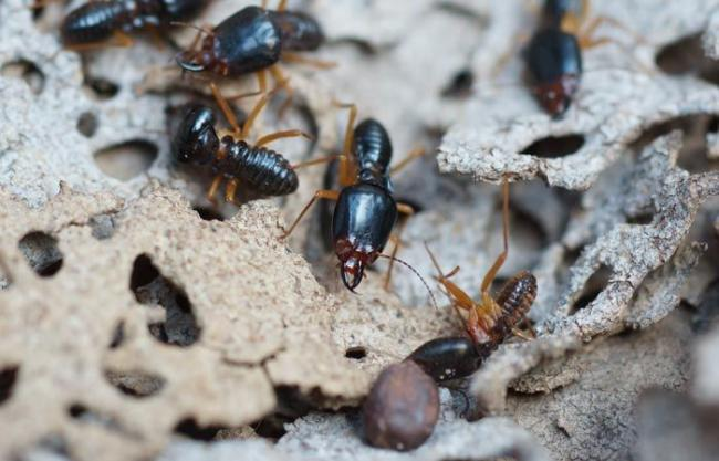 termity3.jpg