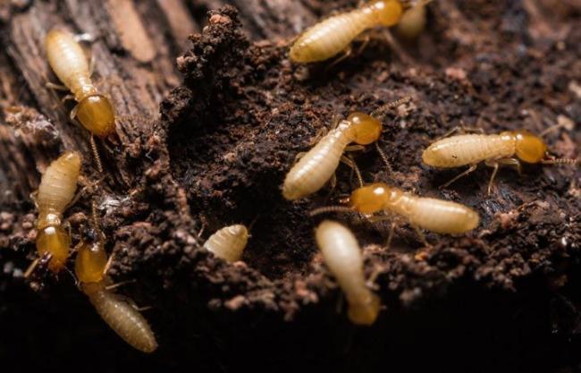 termity2.jpg