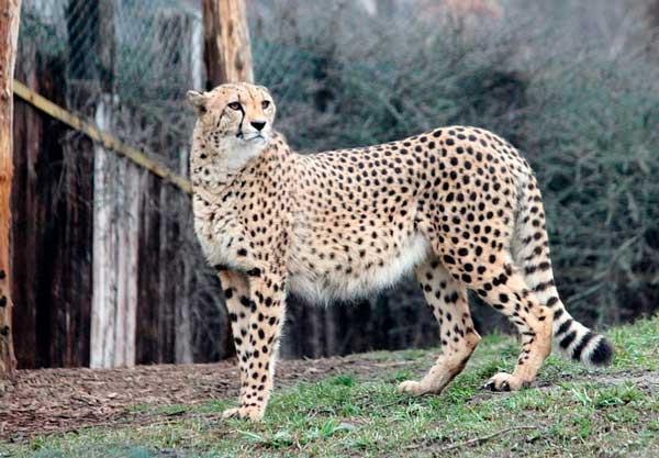 doklad-gepard-2-3-klass-soobshhenie.jpg