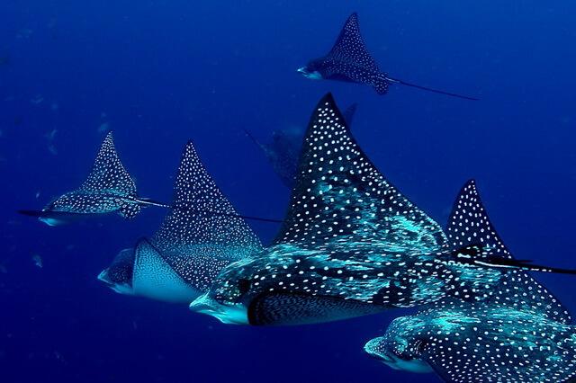 animals-in-atlantic-ocean.jpg
