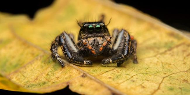 detjam-pro-paukov.jpg