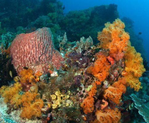 raznoobraznye-rasteniya-mirovogo-okeana-e1512696471537.jpg