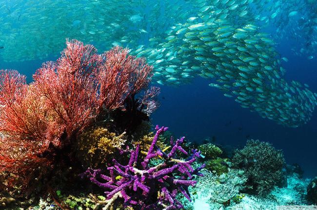 Tropical-fish-coral-ocean-bottom-Hd-Wallpapers.jpg