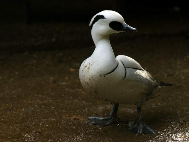 lutok-chto-jeto-za-ptica-animalreader.ru-004-1024x768.jpg