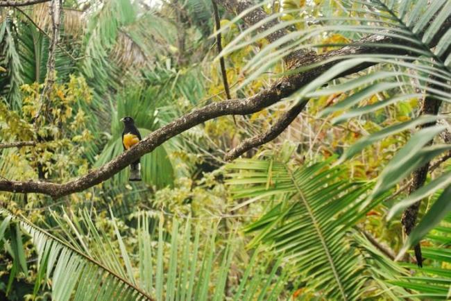 Ekvatorialnye-lesa-klimat-zhivotnye-i-rasteniya.jpg